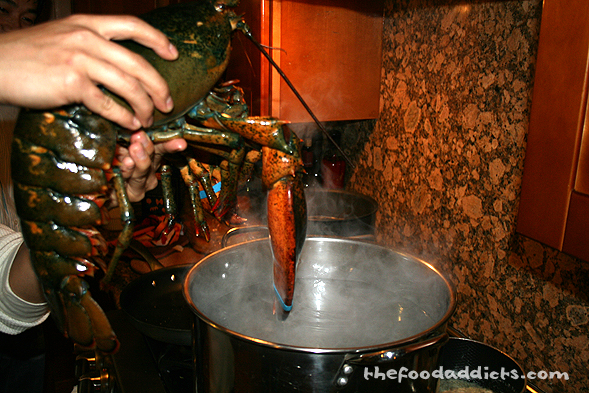 I don't think this lobster wanted to get into this hot salty bath we prepared for him.