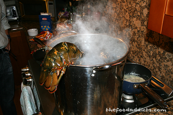 As you can see, it wasn't easy getting the lobster in!