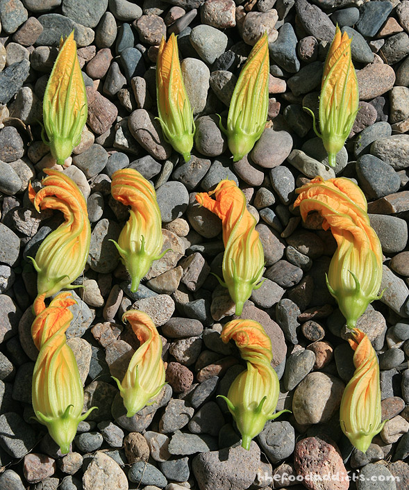 You can see the difference between a squash blossom and a zucchini blossom. The top row of flowers are more cone-shaped and these are the squash blossoms. The two rows below are the zucchini blossoms which twists at the top.